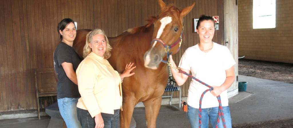 Certified Equine Massage Therapists & Equine Therapy Schools in Ohio