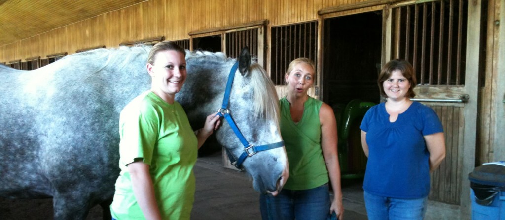 Animal Massage Certification for Equine Therapy Certification